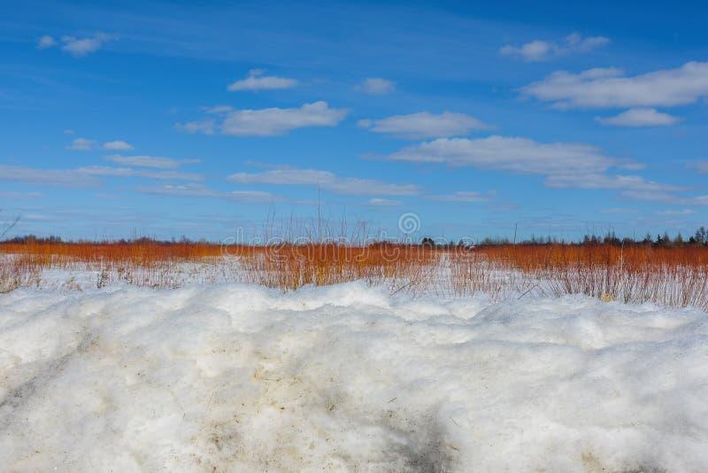 Красивый солнечный день зимы в трясине с 3 слоями - снеге, красных ветвях от кустарника, и ярких голубых небесах саксофона-Zim стоковое изображение