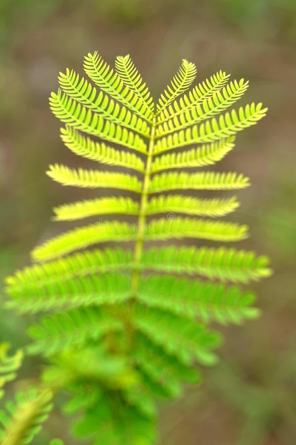 Красивый состав цвета лист стоковое фото rf