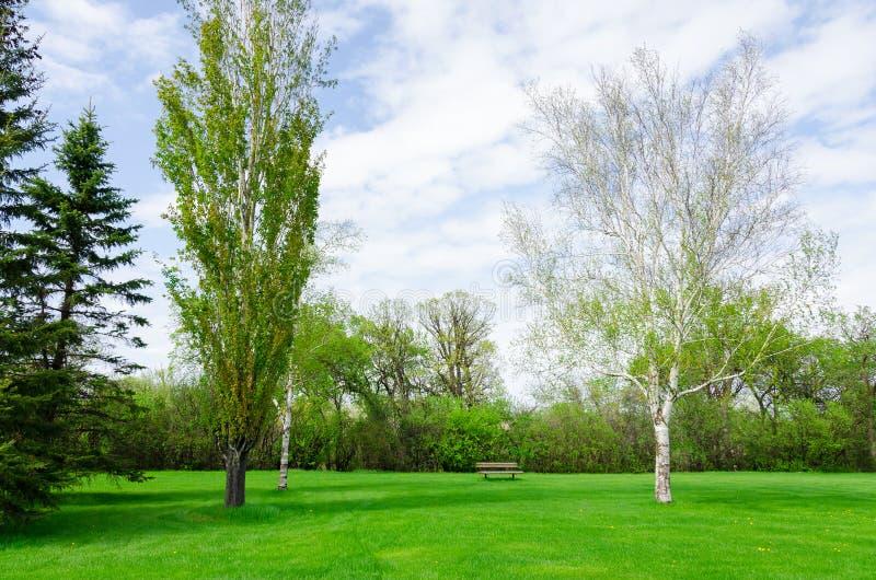 Красивый солнечный день в парке на времени весны стоковое изображение rf