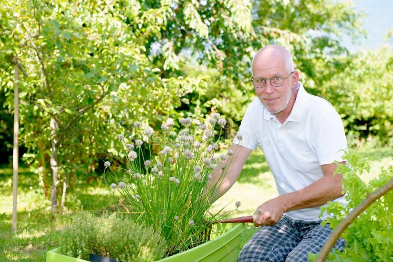 Красивый старший человек в его саде стоковое изображение rf