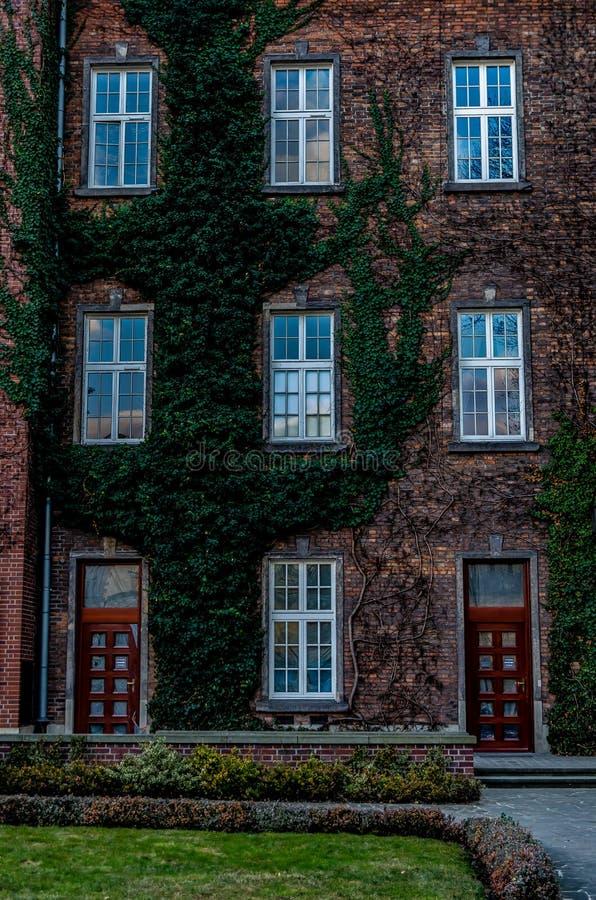 Красивый старый трехэтажный дом кирпича entwined с плющом стоковая фотография