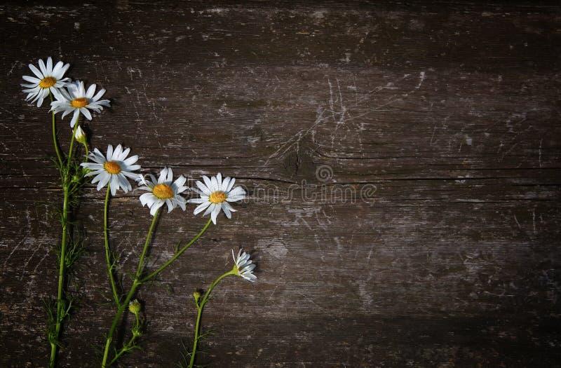 Красивый стоцвет полевых цветков на старой деревянной поцарапанной предпосылке Взгляд сверху Открытый космос для текста стоковые изображения rf