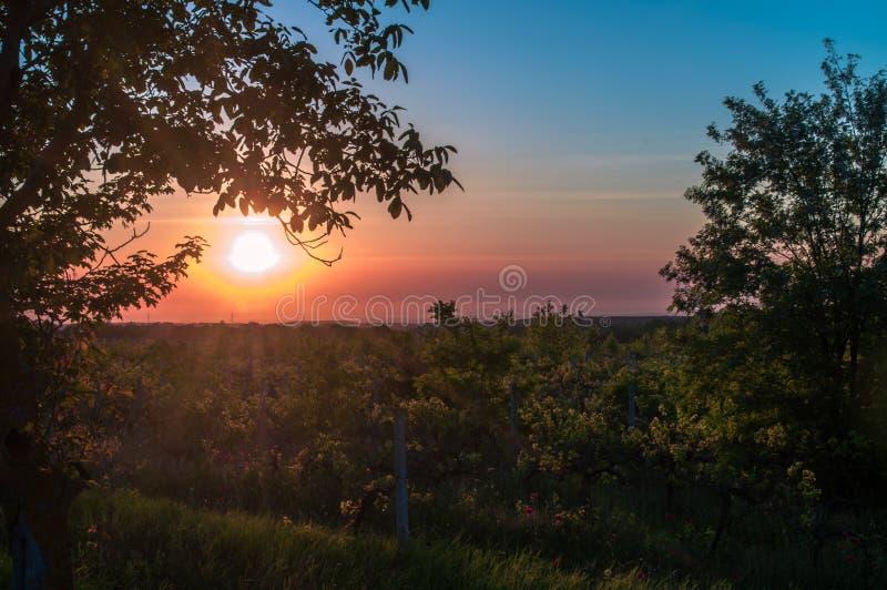 Красивый сценарный виноградник с небом захода солнца стоковые изображения