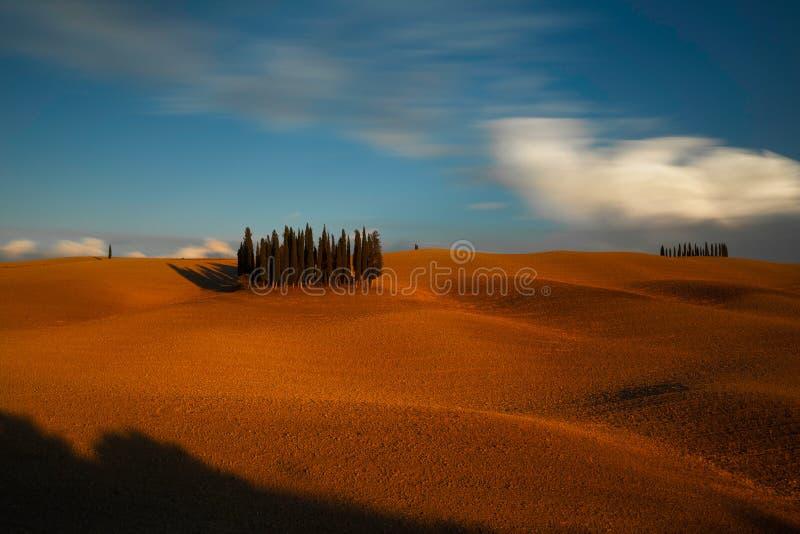 """Красивый тосканский ландшафт известной группы в составе кипарисы около Сан Quirico d """"Orcia, Val d """"Orcia, Тосканы, Италии стоковые фотографии rf"""
