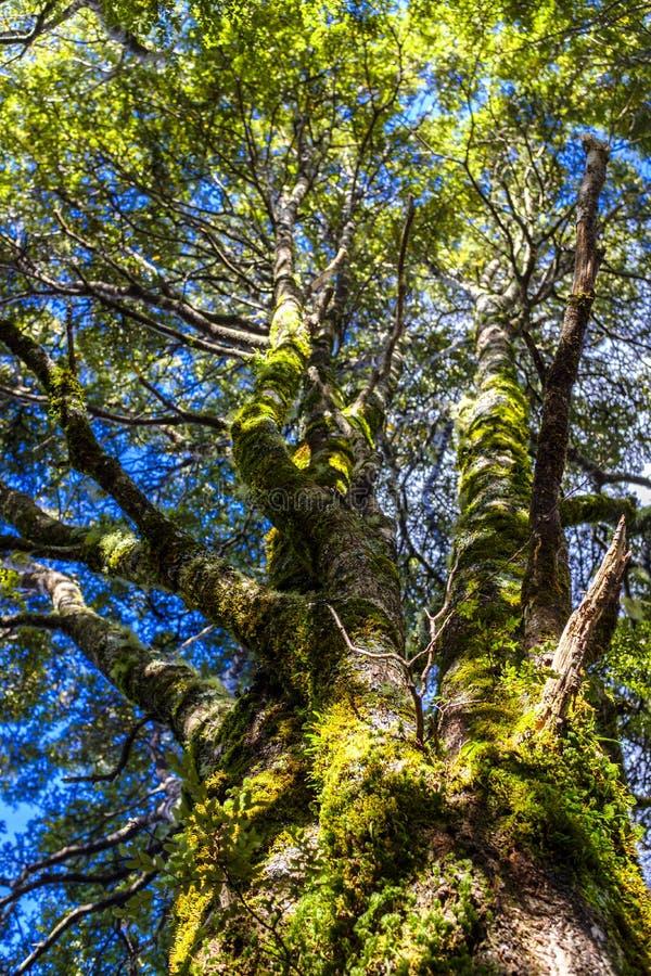 Красивый тропический лес в Новой Зеландии стоковое изображение rf