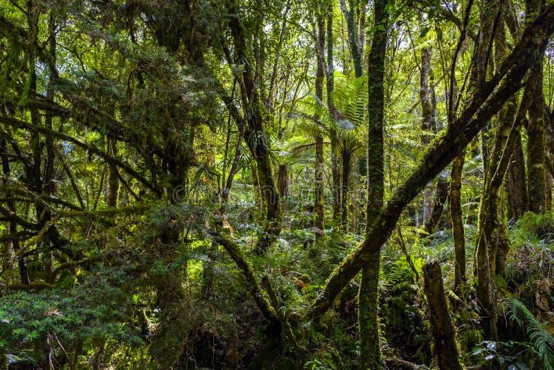 Красивый тропический лес в Новой Зеландии стоковая фотография