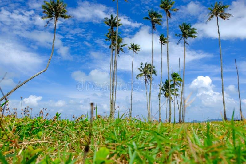 Красивый тропический пейзаж вида на море, кокосовая пальма над предпосылкой пасмурного и голубого неба стоковая фотография rf