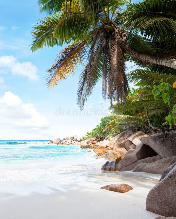 Красивый тропический пляж песка стоковое изображение