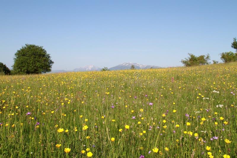 Красивый луг с цветками стоковые фотографии rf