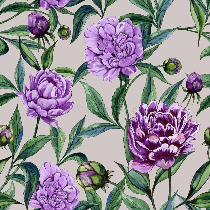 Красивый фиолетовый пион цветет с зелеными листьями на бежевой предпосылке флористическая картина безшовная самана коррекций высо иллюстрация штока
