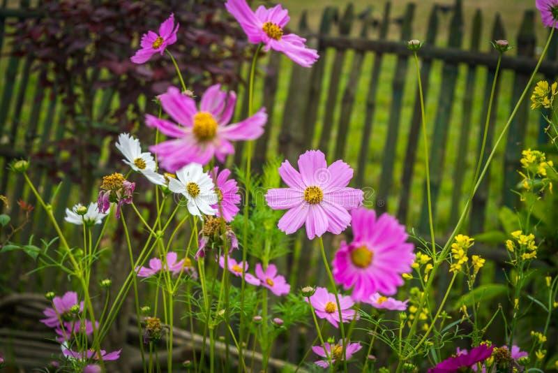 Красивый цветок весеннего сезона стоковая фотография
