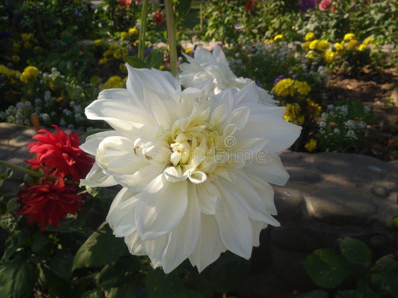 Красивый цветок в белом цвете стоковые изображения