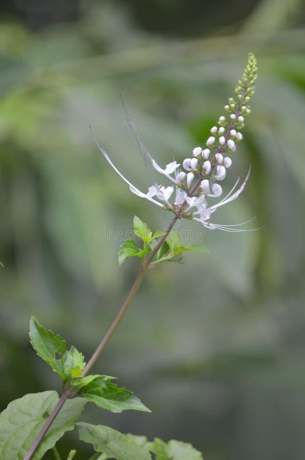 Красивый цветок в одичалой природе стоковая фотография rf