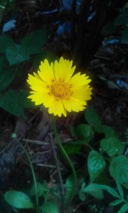 Красивый цветок для деревни стоковое изображение