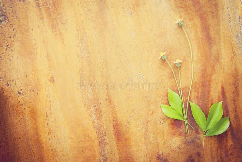 Красивый цветок завода на деревянной текстуре стоковые фото