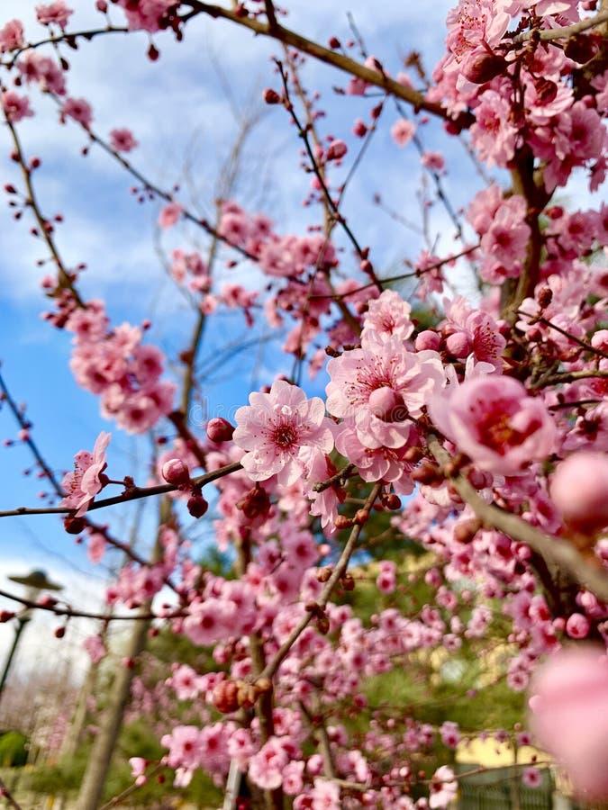 Красивый цветок и голубое небо стоковые фото