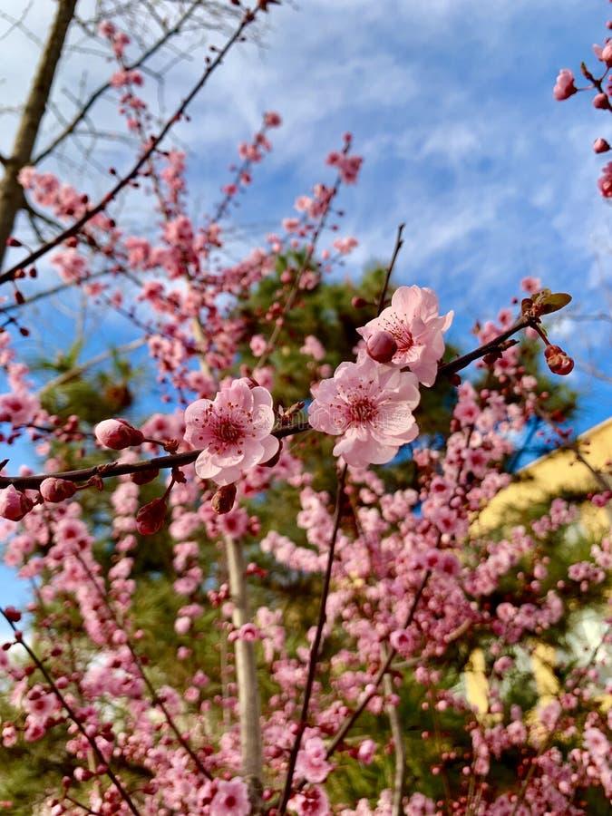 Красивый цветок и голубое небо стоковые изображения rf