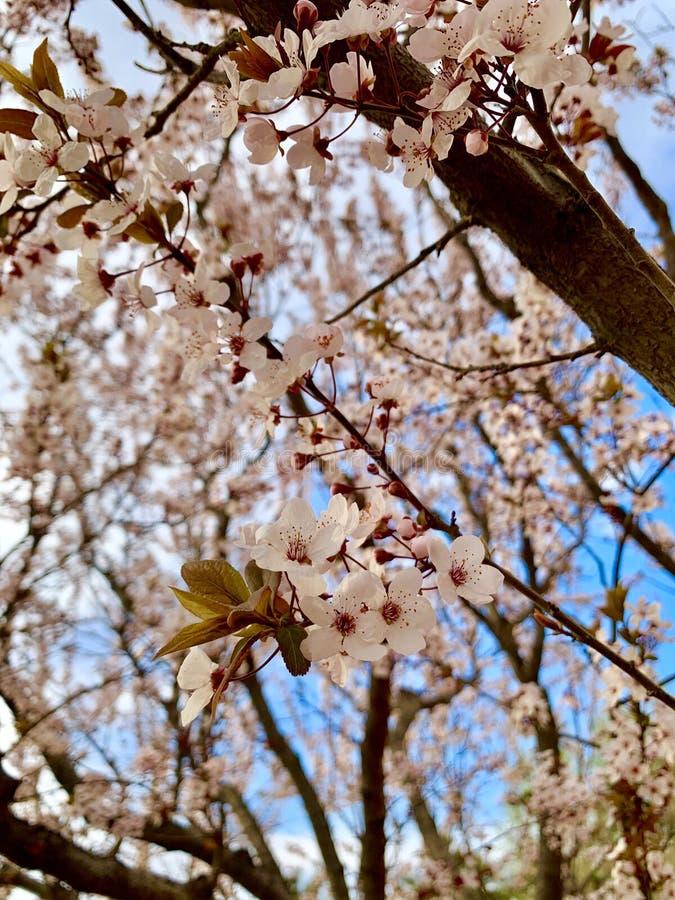Красивый цветок и голубое небо стоковые изображения