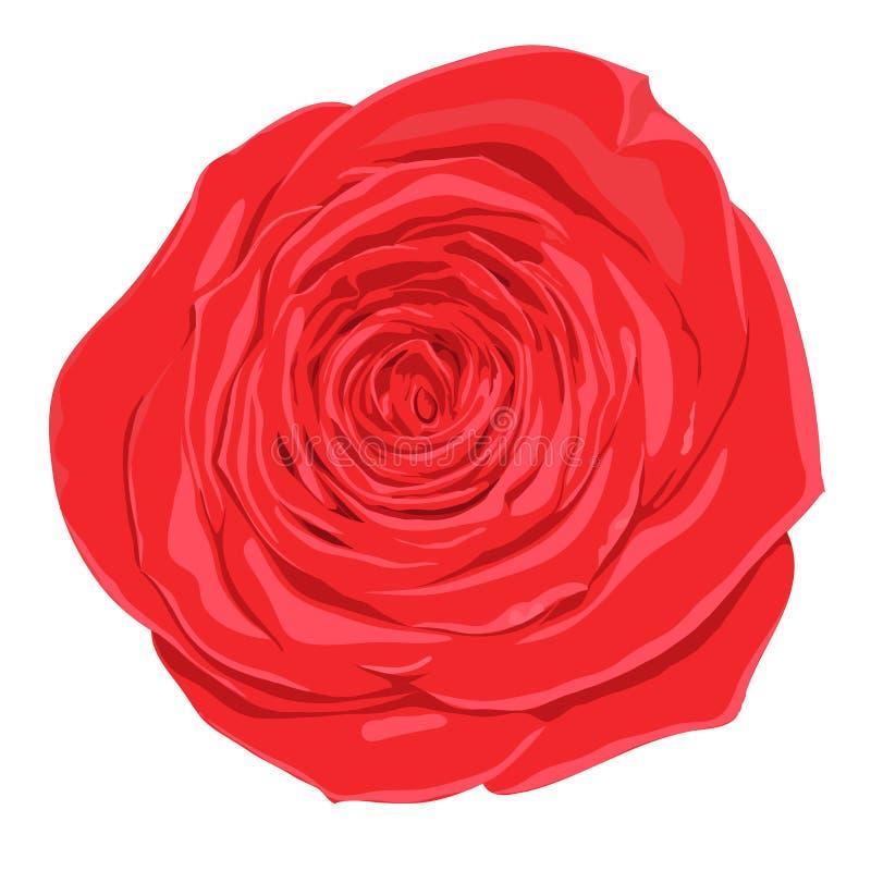 Download Красивый цветок красной розы с влиянием изолированного чертежа акварели на белой предпосылке Иллюстрация штока - иллюстрации насчитывающей карточка, изолировано: 41651111