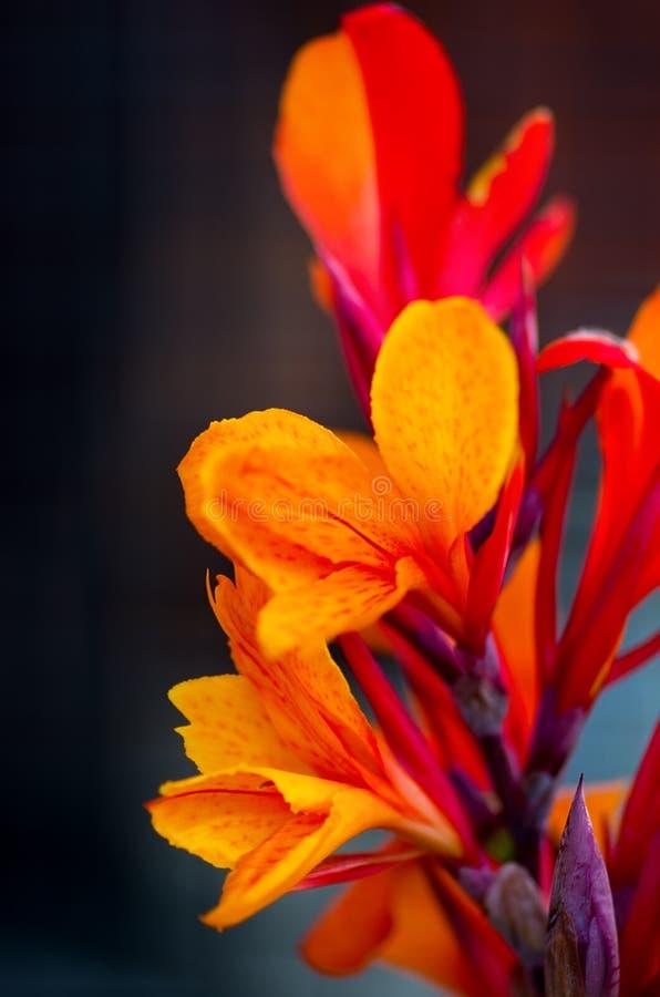 Красивый цветок огня стоковые изображения rf