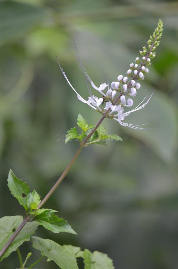 Красивый цветок с пчелой меда в одичалой природе стоковые фото