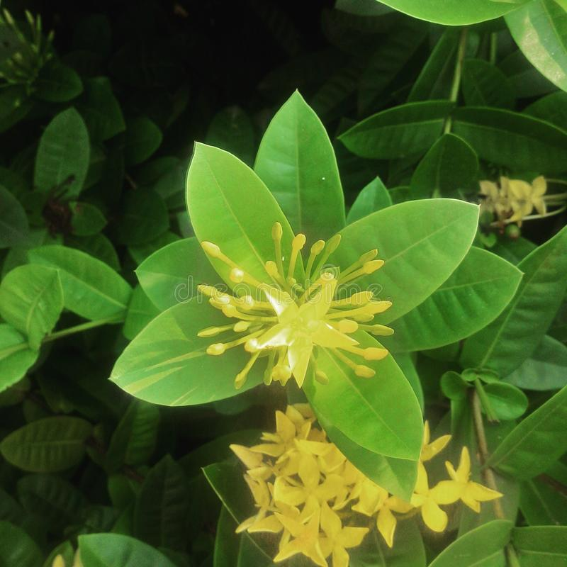 Красивый цветок утра стоковая фотография