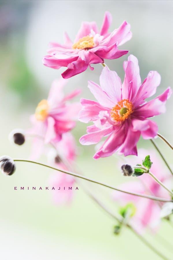Красивый цветок стоковая фотография