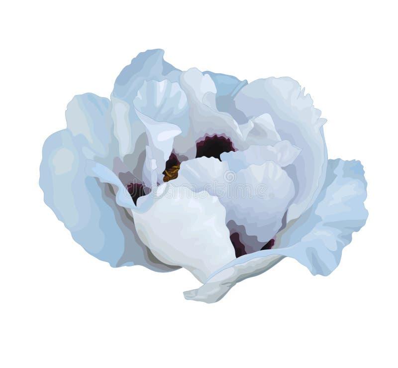 Download Красивый цветок Arborea Paeonia завода (пиона дерева) белый с влиянием изолированного чертежа акварели на белой предпосылке Иллюстрация штока - иллюстрации насчитывающей флористическо, торжество: 41650059