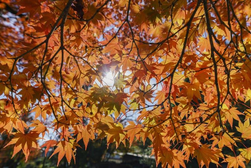 Красивый цвет падения около Hiyoshi Taisha стоковые фотографии rf