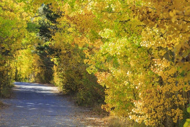 Красивый цвет падения в Калифорнии стоковые фото