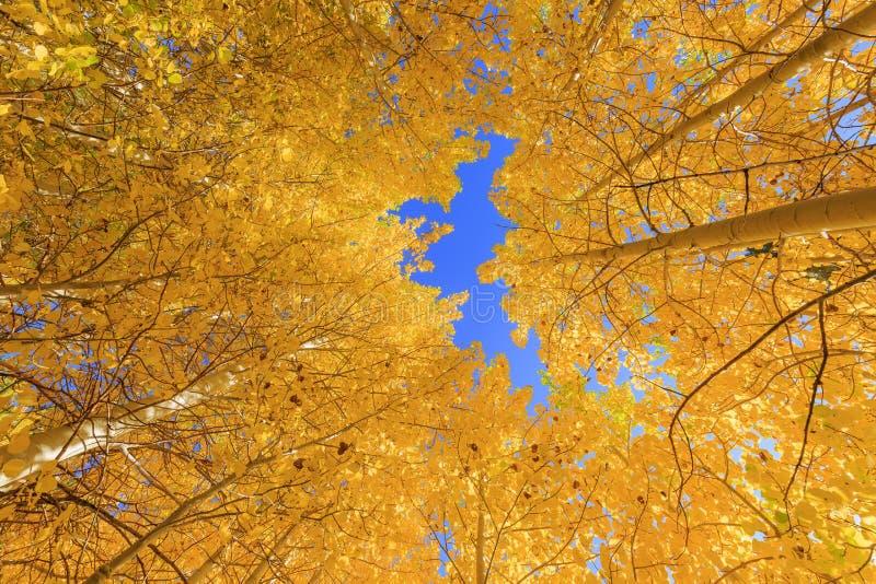 Красивый цвет падения в Калифорнии стоковое изображение