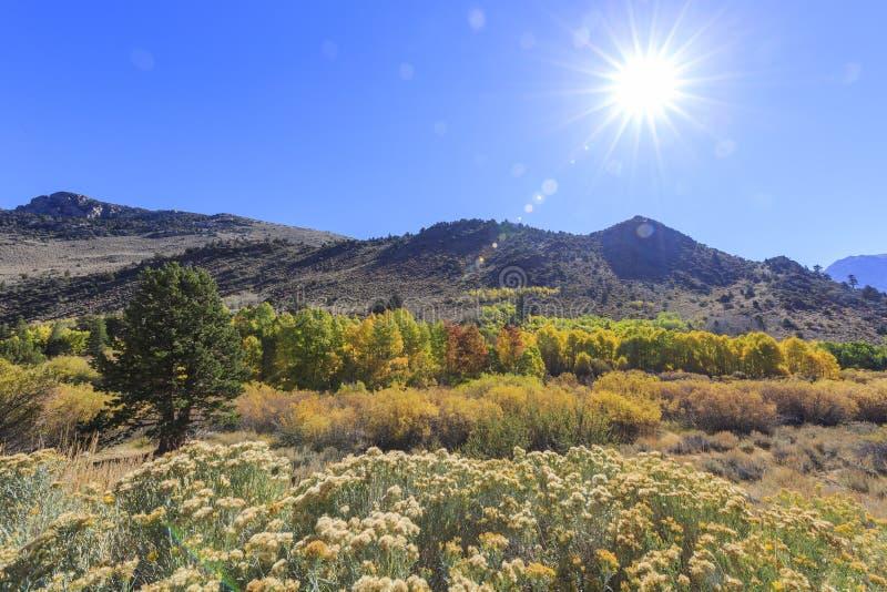 Красивый цвет падения в Калифорнии стоковые изображения rf