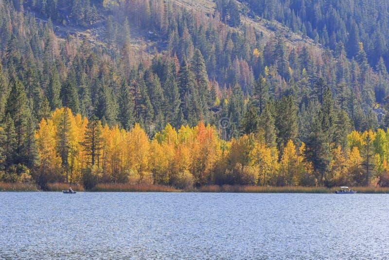 Красивый цвет падения в Калифорнии стоковые фотографии rf