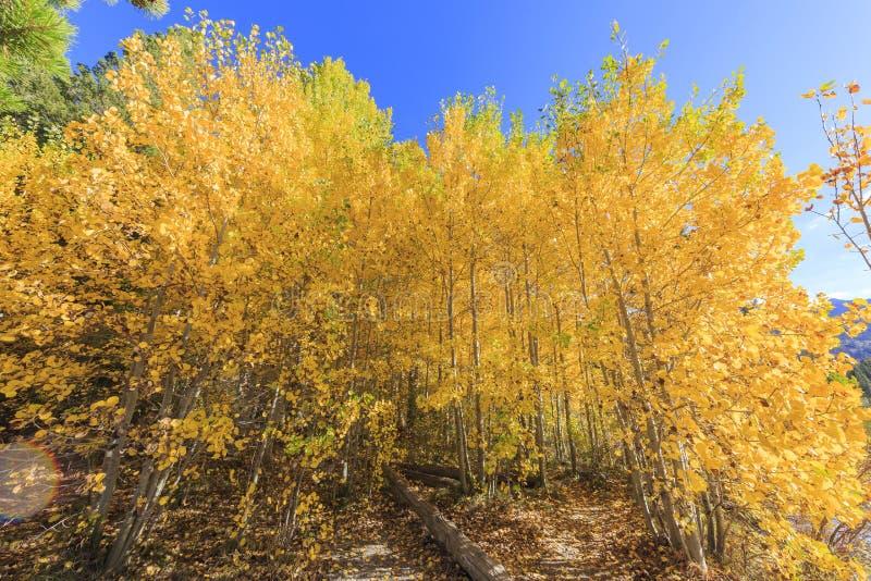 Красивый цвет падения в Калифорнии стоковая фотография