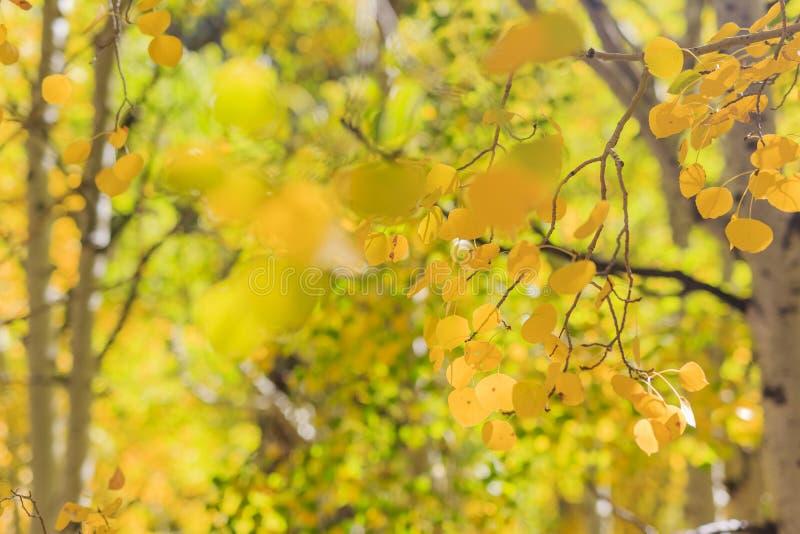 Красивый цвет падения в Калифорнии стоковые изображения