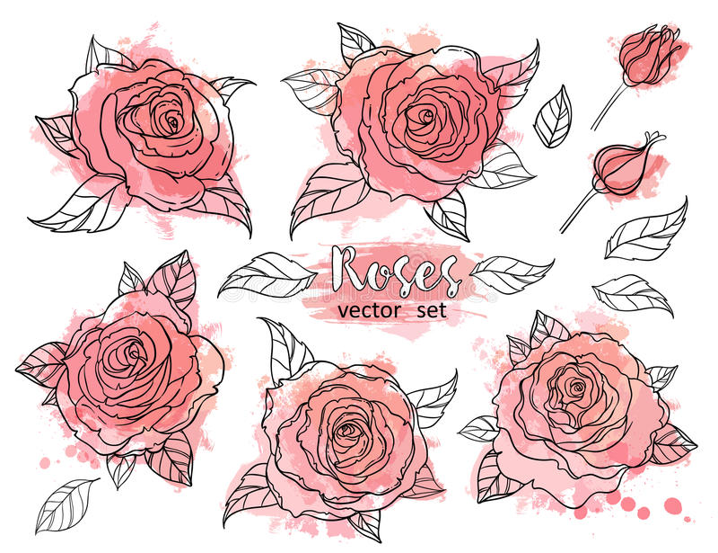 Красивый чертеж букета роз на бежевой предпосылке grunge Рука иллюстрация штока