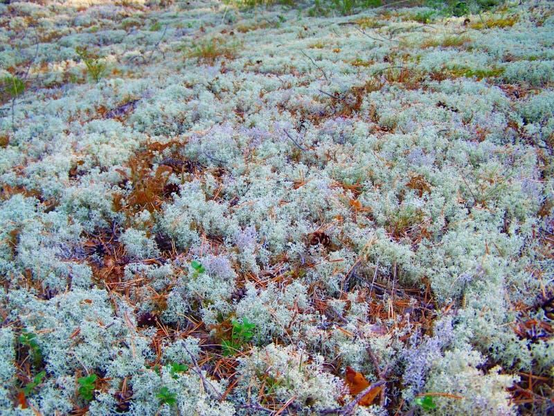 Красивый шведский лес 24 стоковое изображение rf