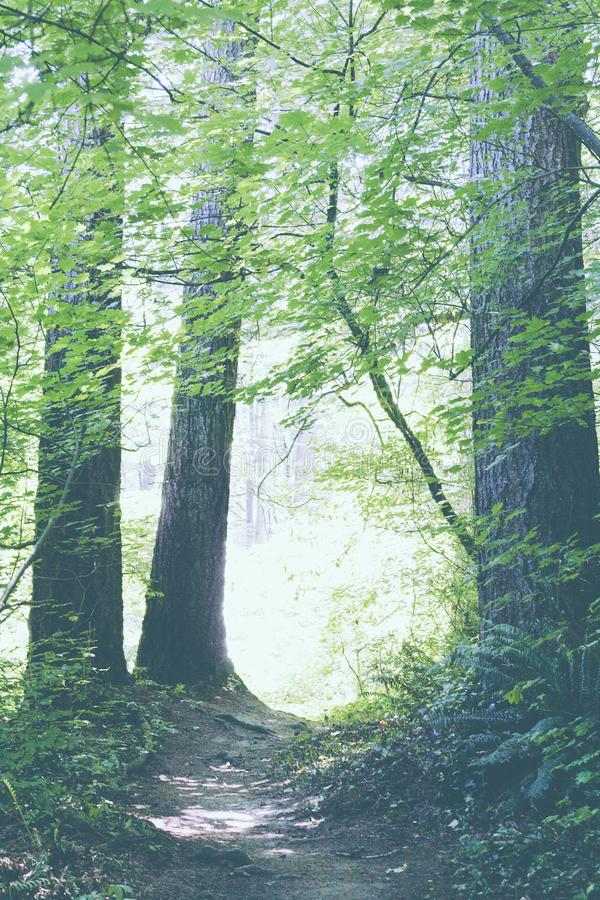Красивый яркий лес с маленькой тропой стоковые изображения rf
