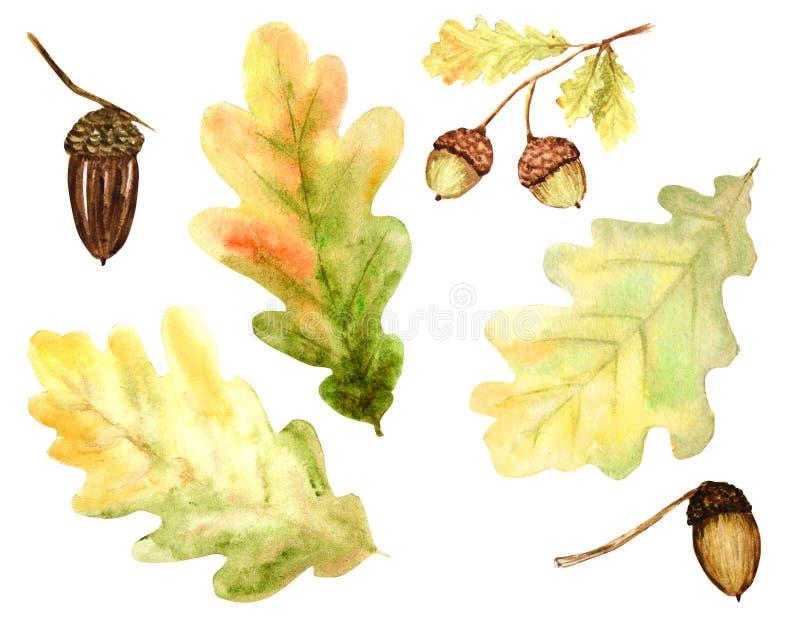 Красивый яркий набор цветов листьев, ветвей и жолудей дуба осени r иллюстрация штока
