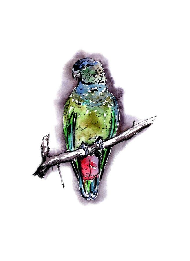 Красивый яркий птиц-попугай, в стиле акварели, на красивой предпосылке иллюстрация вектора