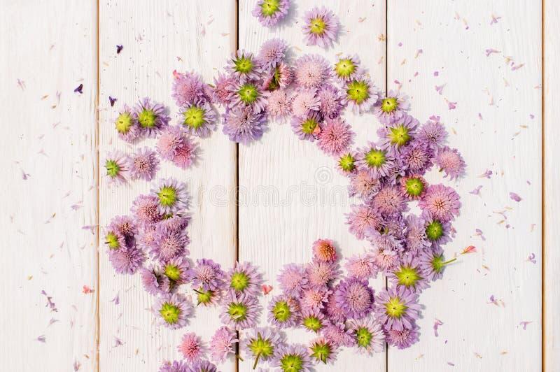 Красивый circlet астры цветет на белой древесине стоковое изображение