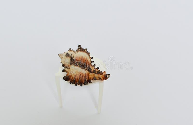 Красивый cockleshell на небольшой таблице на белой предпосылке стоковое изображение