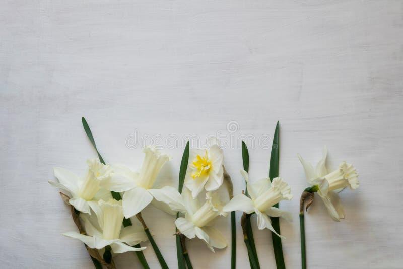 Красивый daffodil на белой предпосылке Яркий белый daffodil цветет на досках покрашенных белизной деревянных стоковое изображение rf