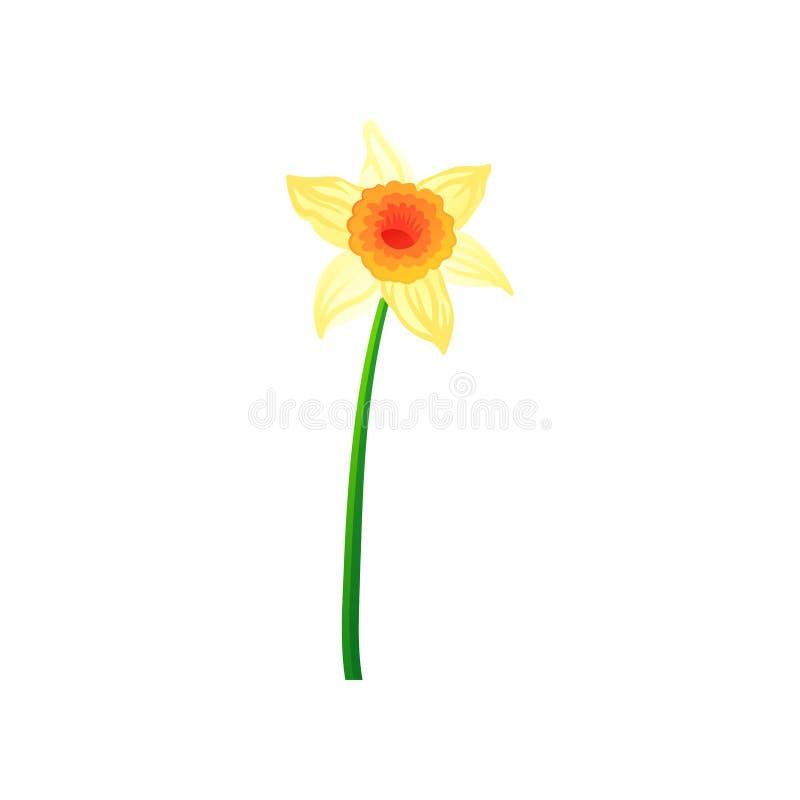Красивый daffodil с желтыми лепестками Красочной нарисованный рукой значок вектора narcissus Зацветая цветок весны иллюстрация вектора