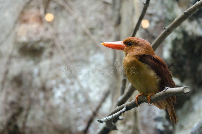 Красивый Kingfisher стоковое фото rf