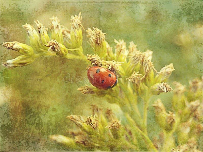 Красивый ladybug лета идя для травинки на зеленом цвете стоковое изображение