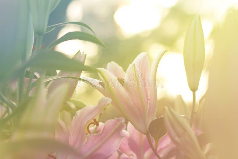 Красивый lilly зацветать весной сад стоковые изображения rf