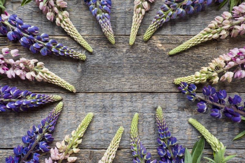 Красивый lupine цветет на деревянной рамке космоса экземпляра предпосылки стоковая фотография