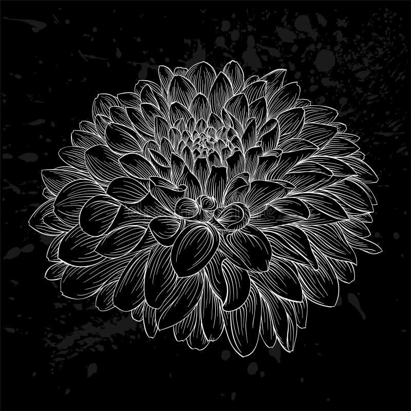 Красивый monochrome черно-белый изолированный цветок георгина Нарисованные вручную линии контура и ходы иллюстрация штока