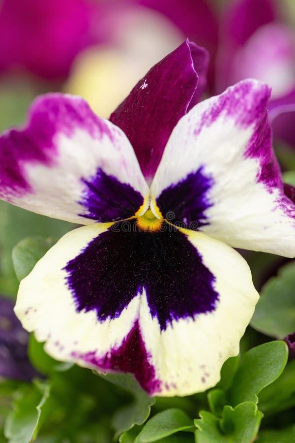 Красивый multicolor цветок стоковое изображение